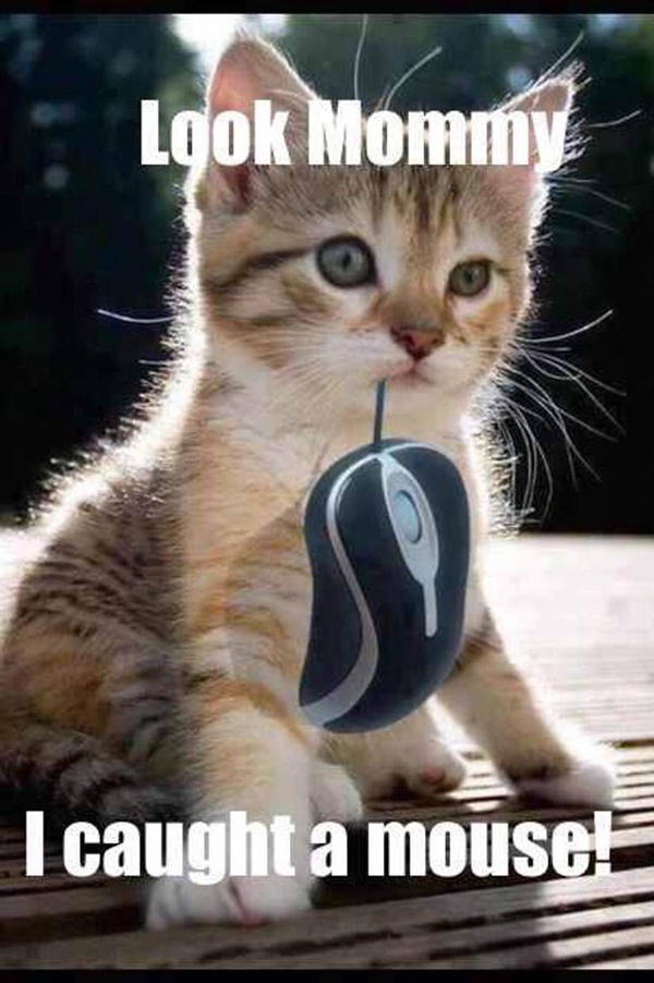 Look Mommy. I caught a mouse!