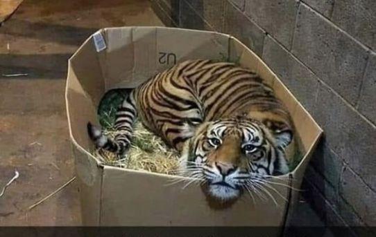 Lost kitten needs forever home