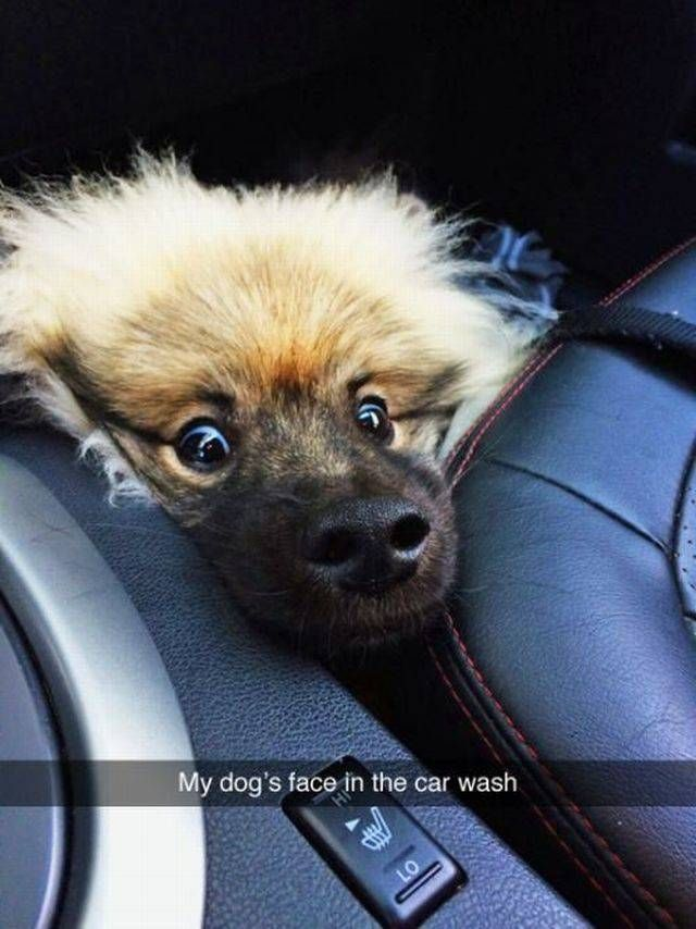 My dog's face in the car wash