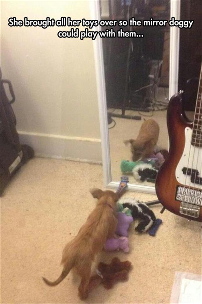 She brought all her toys over the mirror doggy could play with them…