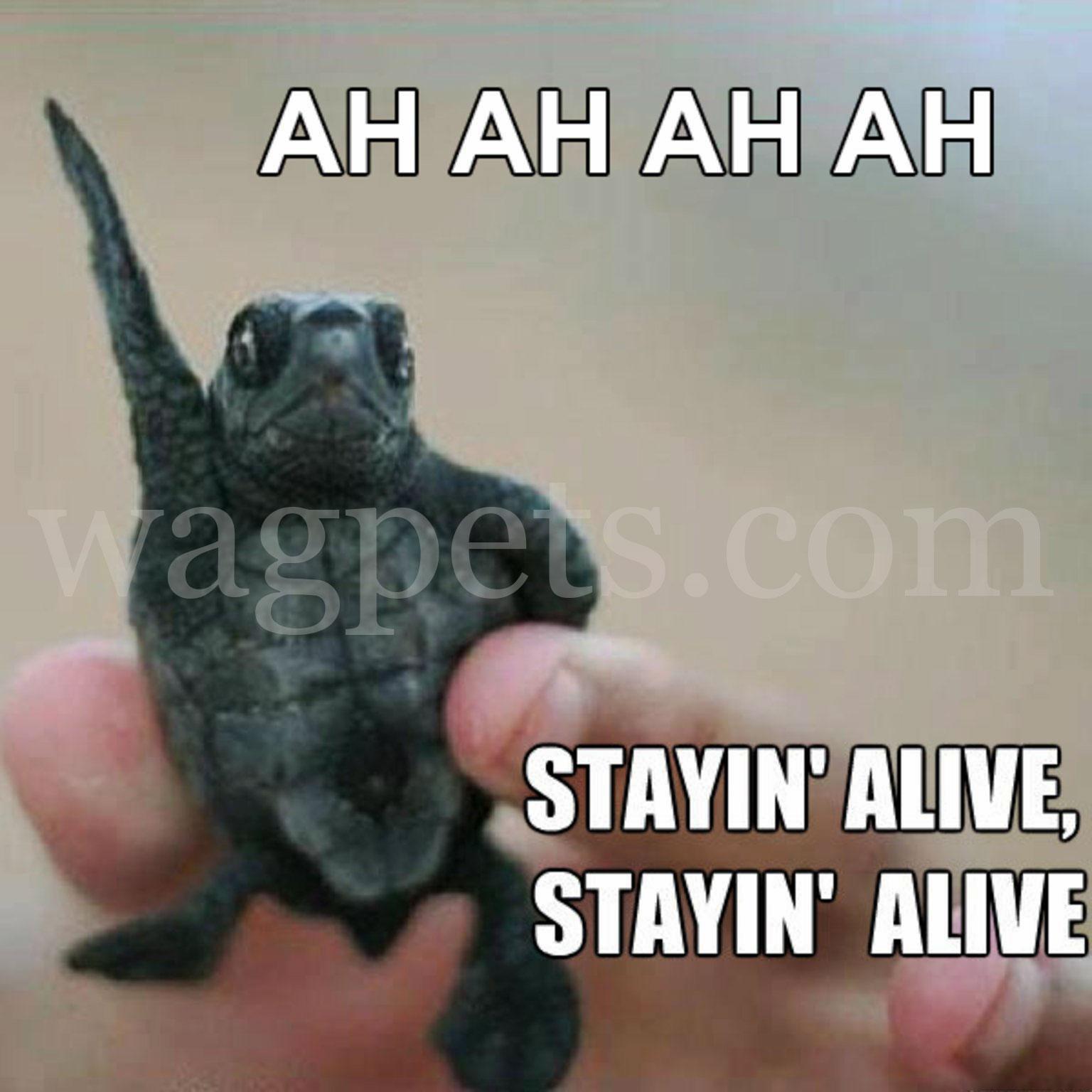 AH AH AH AH Stayin' alive Stayin' alive