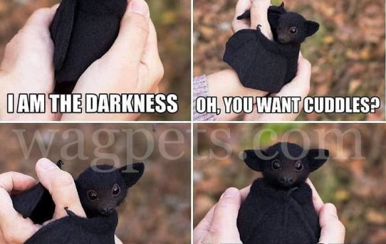 - I'm the darkness. - Oh, you want cuddles?