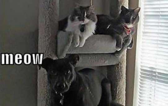 Meow meow uh… meowf?