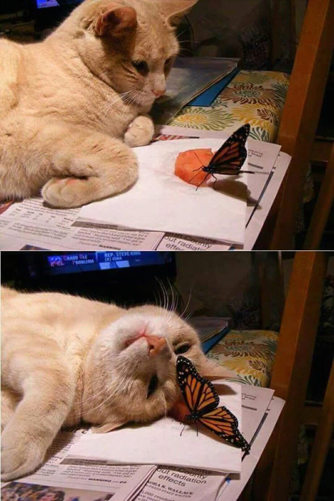 So lovely cat