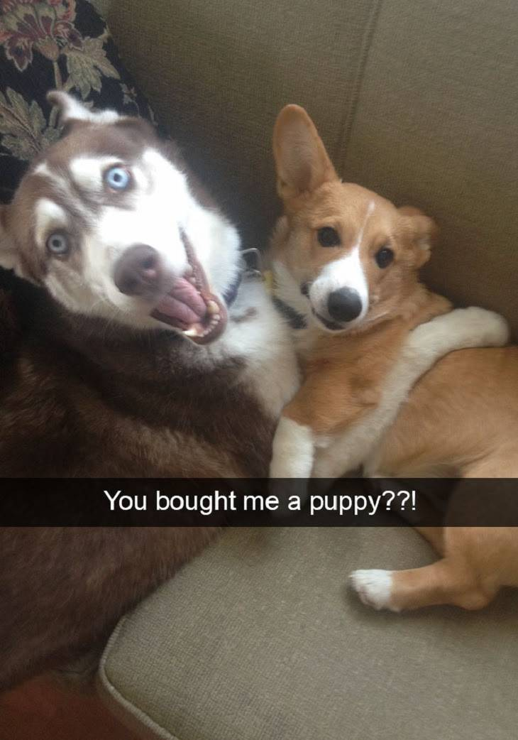 You bought me a puppy??!