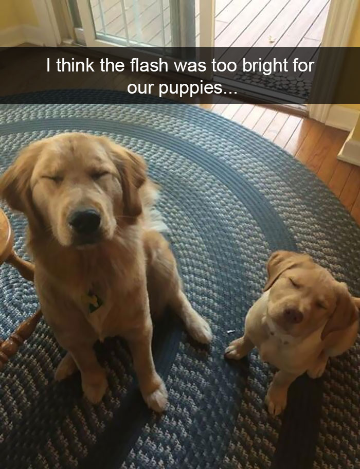 I think the flash was too bright for our puppies…