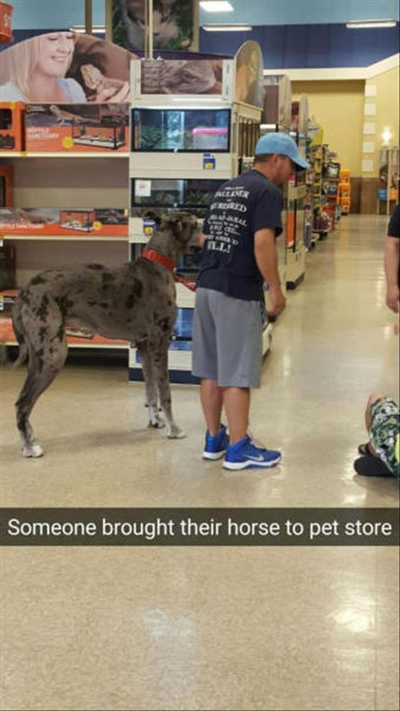 Someone brought their horse to pet store