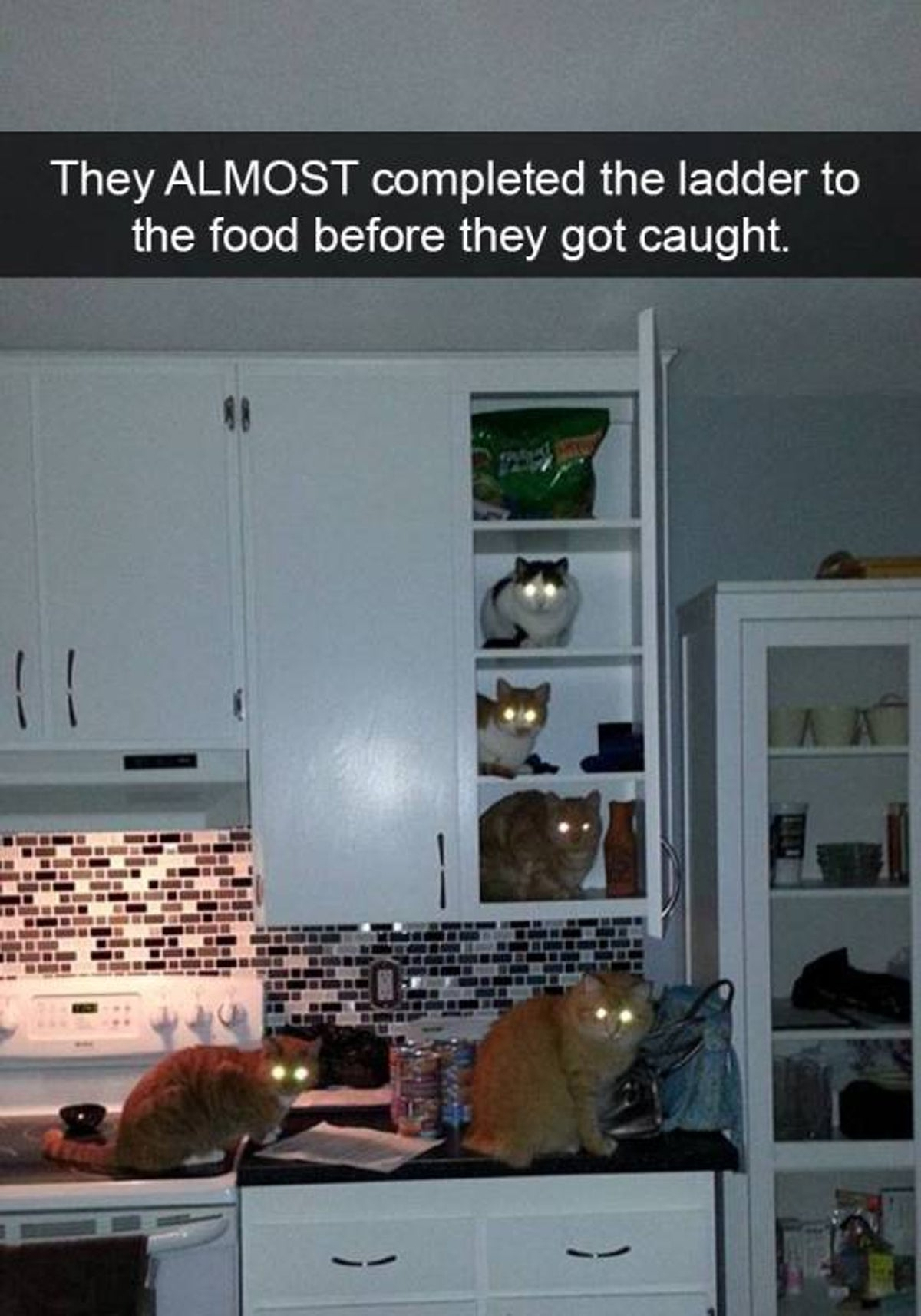 They ALMOST completed the ladder to the food before they got caught.