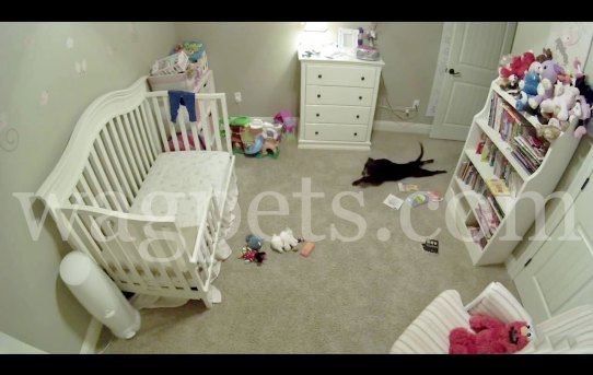 This dog isn't allowed in the baby's room