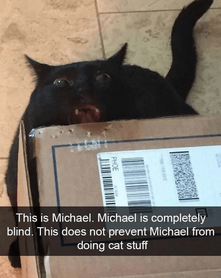 This is Michael. Michael is completely blind. This does not prevent Michael from doing cat stuff.