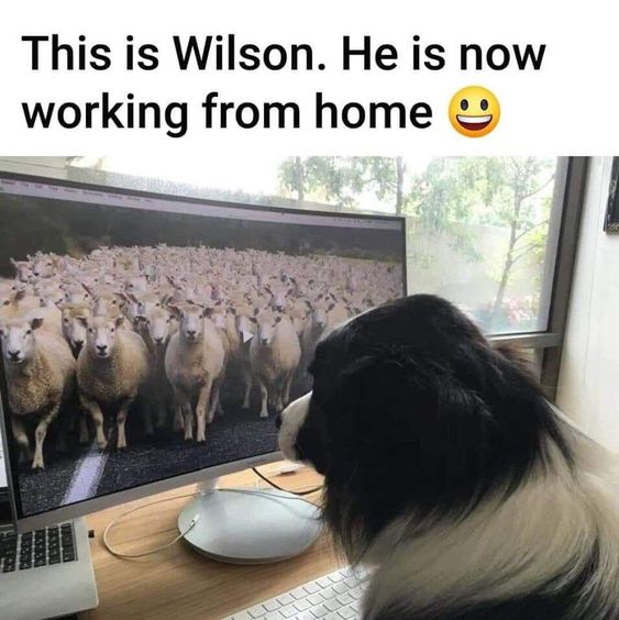 This is Wilson. He is now working from home.