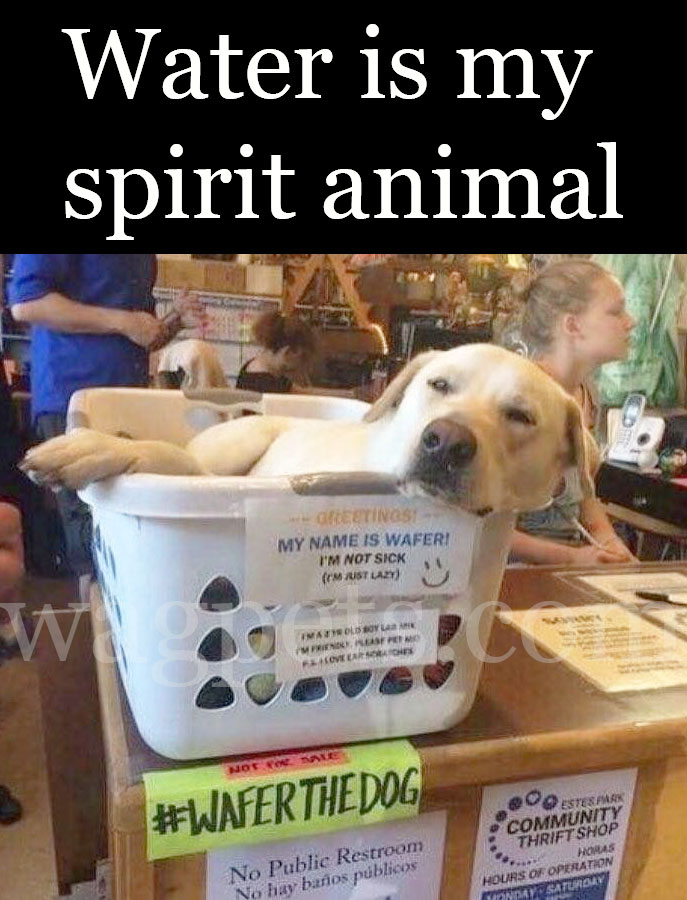 Water is my spirit animal