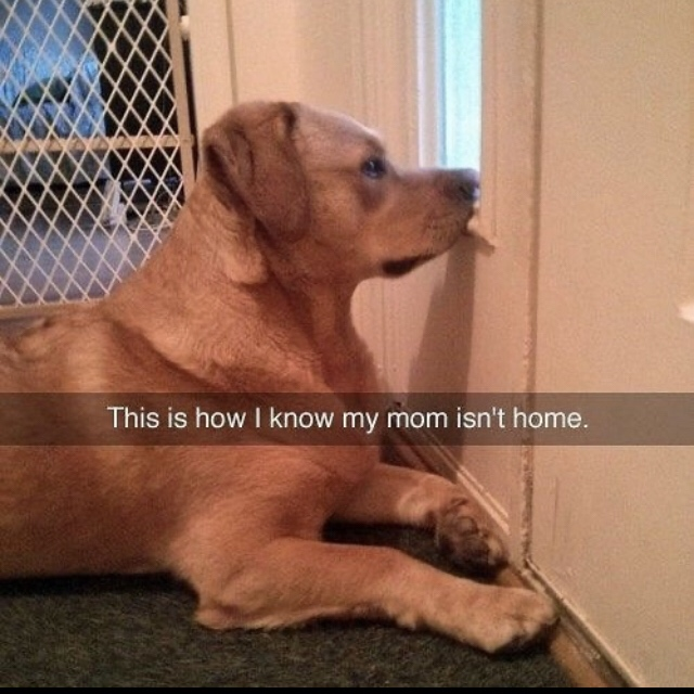 This is how I know my mom isn't home.