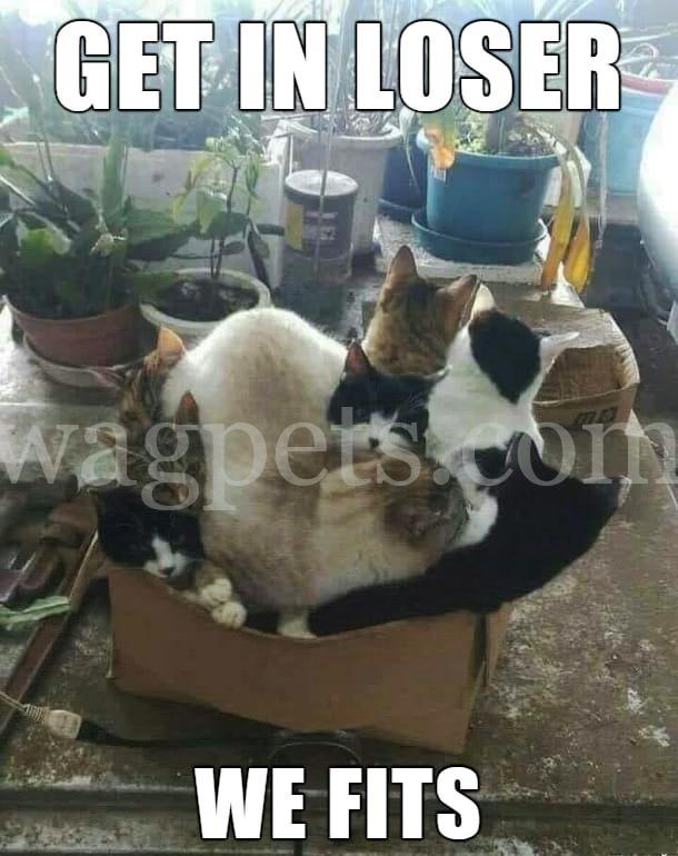Get in, loser! We fit.