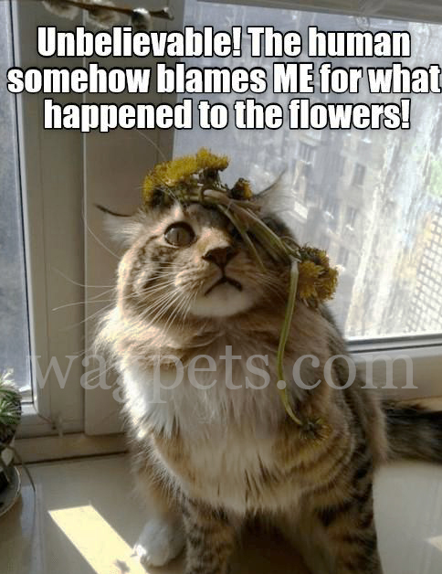 Unbelievable! The human somehow blames ME for what happened to the flowers!