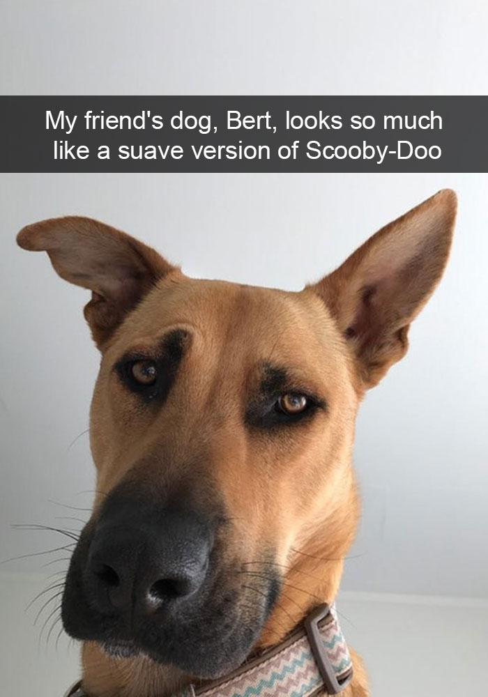 My friend's dog, Bert, looks so much like a suave version of Scooby-Doo