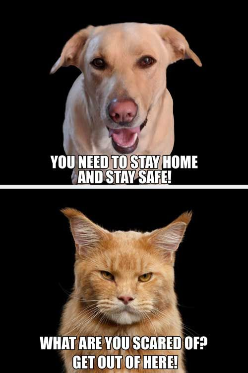You need to stay home and stay safe!