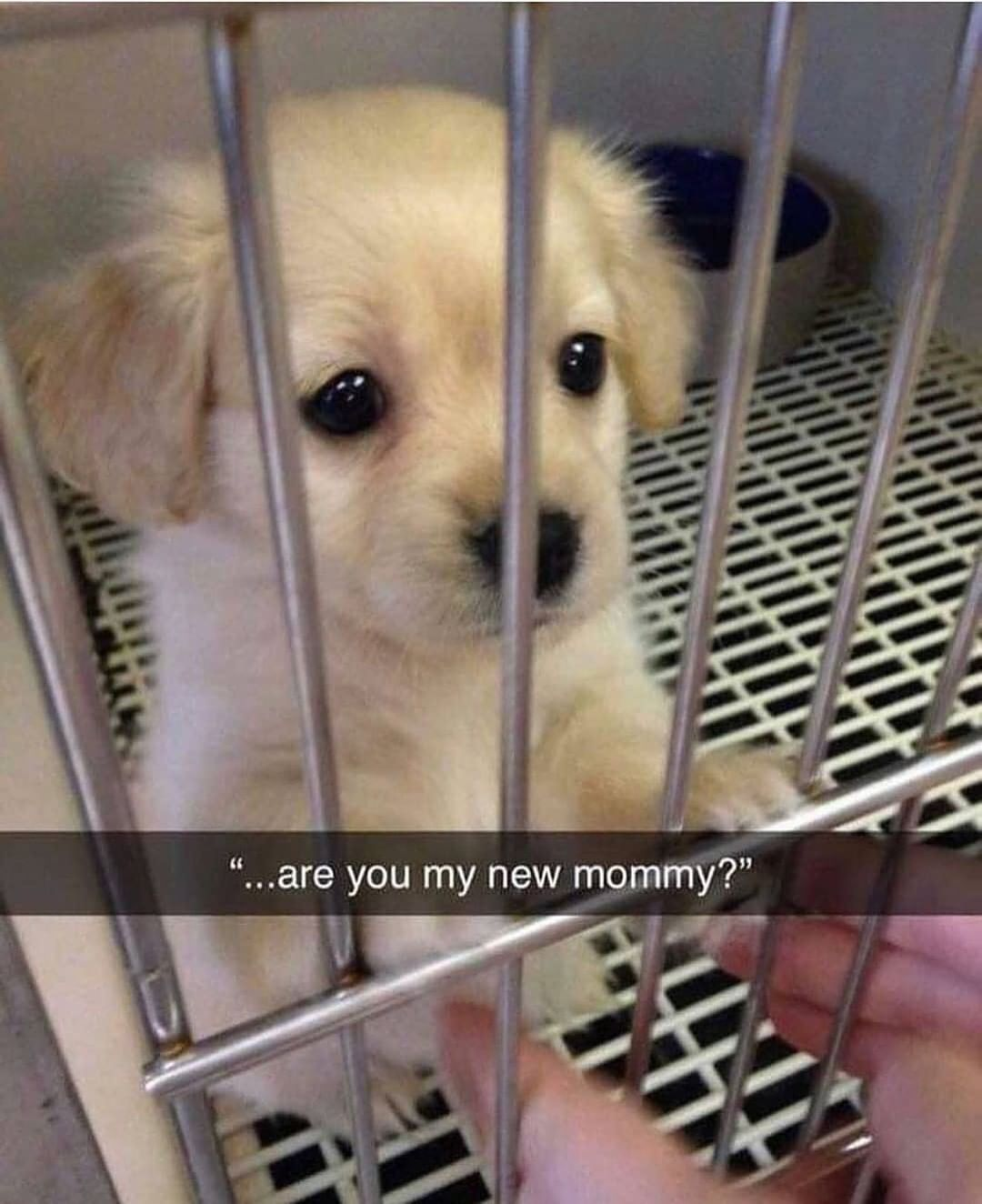 """""""…are you my new mommy?"""""""