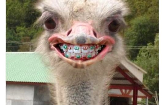 Middle school pictures be like