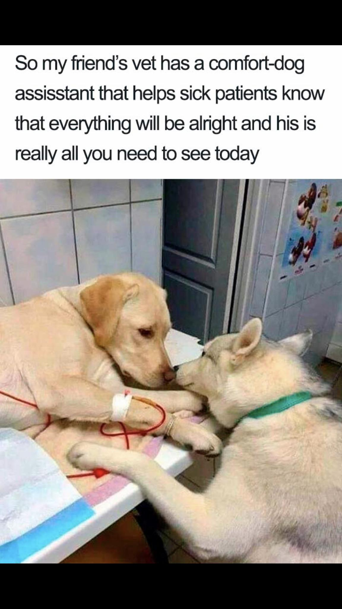 So my friend's vet has a comfort-dog assistant that helps sick patients know that everything will be alright and he is really all you need today