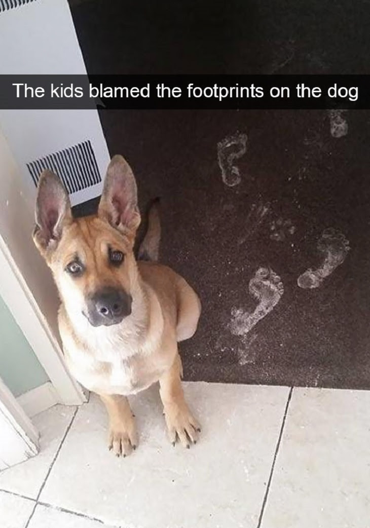 The kids blamed the footprints on the dog