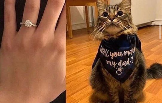 Who said the perfect proposal doesn't exist?