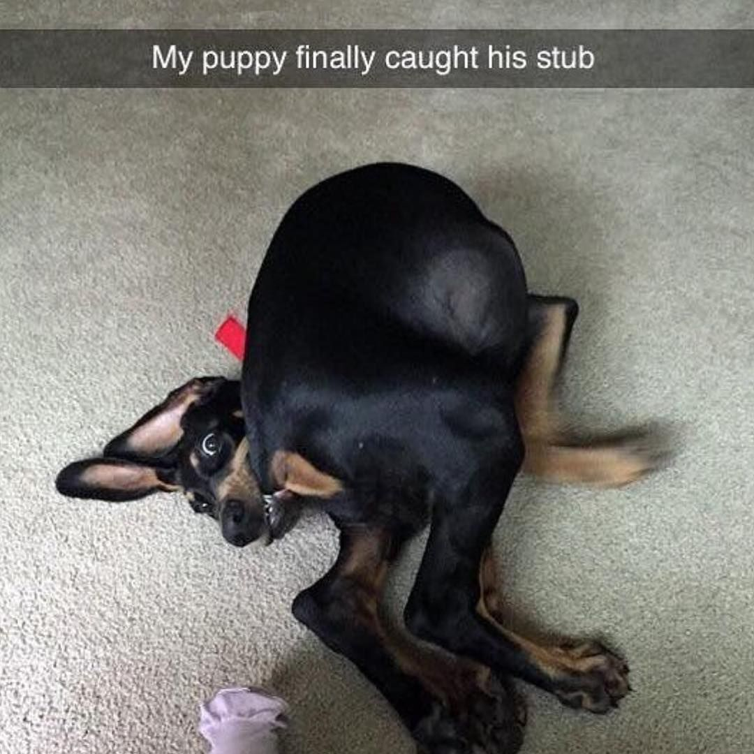 My puppy finally caught his stub