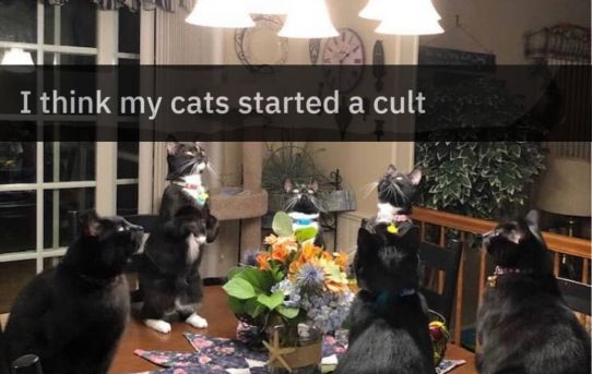 I think my cats started a cult