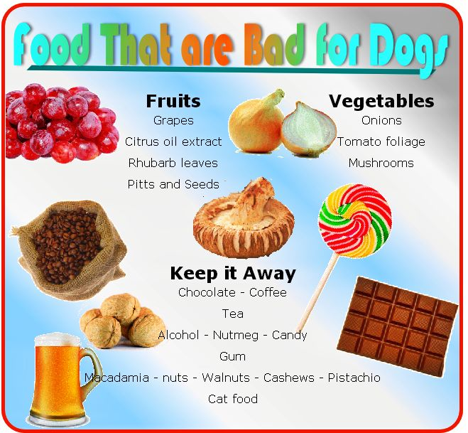 food that are bad for dogs