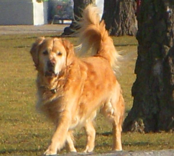 dogfriend