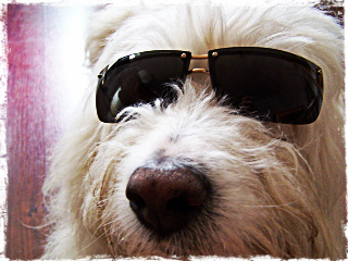 cool dogs