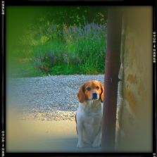 dog friendly villa Tuscany