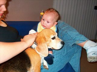 introduce new baby to dog