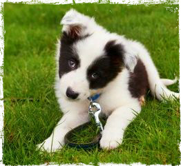 training puppy tips