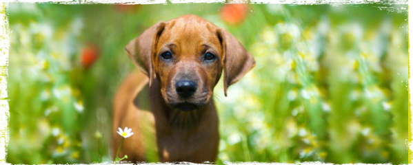 spring tips for dogs