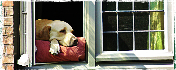 do dogs have separation anxiety