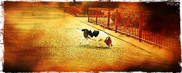 dog friendly walk at Battersea Park