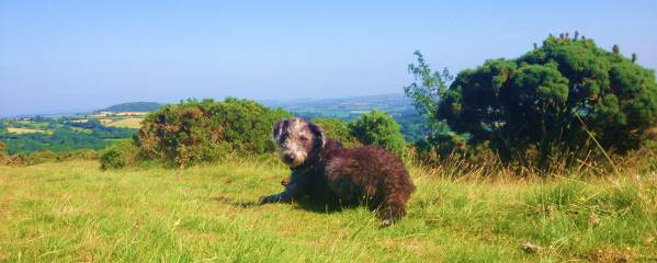 Dartmoor in Devon – doggy heaven!