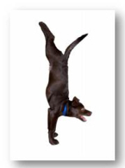 UK yoga for dogs