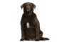 Canine Obesity: Why It Happens and How You Can Help Your Dog