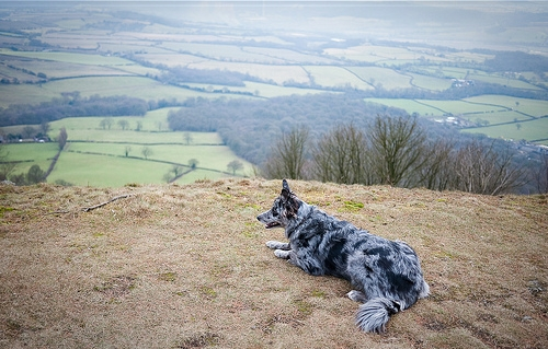 pet friendly travel in the uk