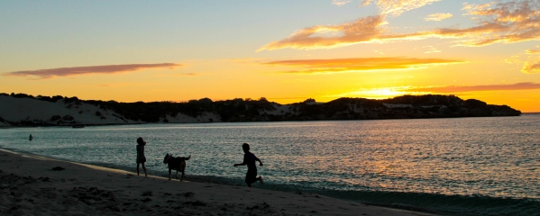taking your pet to Australia step by step