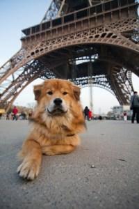 take your dog to Paris