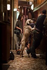take you dog to paris