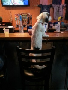 dog friendly bar for dog lovers