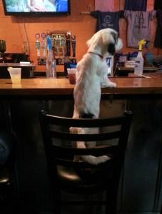 dog friendly bar for dog lovers