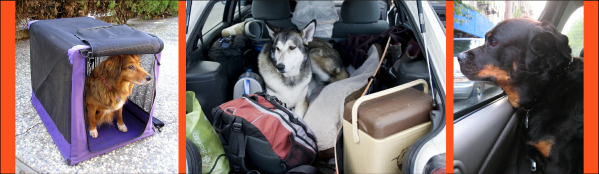 pet dogs air and car travel