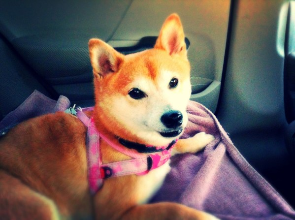 travelling with pets by car