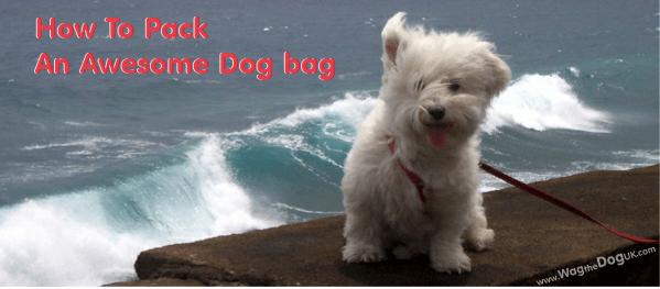 dog bag essentials for travel
