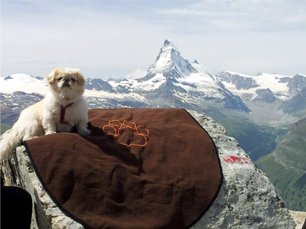 dogs in the high mountains